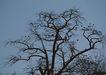 茂盛树木0184,茂盛树木,植物,树端