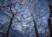 茂盛树木0186,茂盛树木,植物,山林 树枝