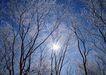 茂盛树木0188,茂盛树木,植物,太阳光 丛林美景