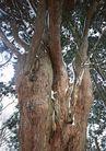茂盛树木0190,茂盛树木,植物,老树