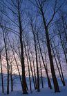 茂盛树木0194,茂盛树木,植物,小树林