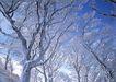 茂盛树木0196,茂盛树木,植物,大树