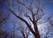 茂盛树木0198,茂盛树木,植物,大树干