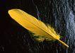 迷人的大自然0148,迷人的大自然,植物,一片黄色羽毛