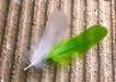 迷人的大自然0152,迷人的大自然,植物,两根羽毛