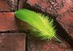 迷人的大自然0154,迷人的大自然,植物,绿色羽毛