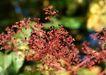 迷人的大自然0162,迷人的大自然,植物,迷人植物