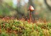 迷人的大自然0169,迷人的大自然,植物,出土的蘑菇