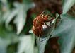 迷人的大自然0173,迷人的大自然,植物,蜜蜂 叶子 触角