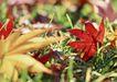 迷人的大自然0174,迷人的大自然,植物,枫叶 落叶 秋天