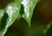 迷人的大自然0183,迷人的大自然,植物,露珠 树叶