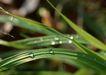 迷人的大自然0185,迷人的大自然,植物,单子叶植物 禾苗