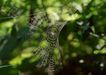 迷人的大自然0188,迷人的大自然,植物,野外