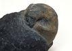 化石0152,化石,静物,出土化石