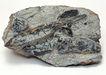 化石0160,化石,静物,石头化石