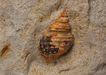 化石0167,化石,静物,化石图片欣赏