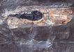 化石0181,化石,静物,化石 鱼化石