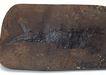 化石0182,化石,静物,石块 鱼纹