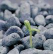 成长的力量0016,成长的力量,鲜花,石头里的绿芽