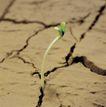 成长的力量0018,成长的力量,鲜花,干涸土地里的绿芽