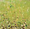 成长的力量0023,成长的力量,鲜花,绿苗
