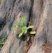 成长的力量0033,成长的力量,鲜花,树根 绿叶 生长