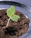 成长的力量0037,成长的力量,鲜花,嫩叶 土壤 幼苗
