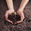 成长的力量0041,成长的力量,鲜花,泥土 绿苗