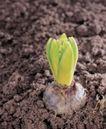 成长的力量0043,成长的力量,鲜花,