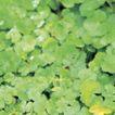 成长的力量0049,成长的力量,鲜花,绿叶