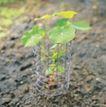 成长的力量0050,成长的力量,鲜花,一株植物