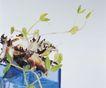 成长的力量0063,成长的力量,鲜花,绿枝