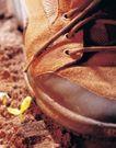 成长的力量0065,成长的力量,鲜花,绿芽 鞋子