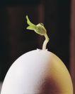 成长的力量0066,成长的力量,鲜花,发芽了