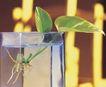 成长的力量0067,成长的力量,鲜花,小苗儿