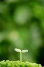 新芽嫩叶0026,新芽嫩叶,鲜花,