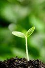 新芽嫩叶0041,新芽嫩叶,鲜花,模糊 绿芽 土地