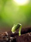 新芽嫩叶0043,新芽嫩叶,鲜花,绿色 水滴 泥巴