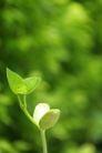 新芽嫩叶0047,新芽嫩叶,鲜花,嫩芽