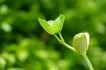 新芽嫩叶0050,新芽嫩叶,鲜花,成长的绿芽