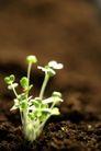 新芽嫩叶0071,新芽嫩叶,鲜花,嫩芽 生长 沃土