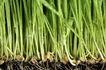 新芽嫩叶0072,新芽嫩叶,鲜花,新芽 黑土 植物