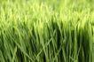 新芽嫩叶0074,新芽嫩叶,鲜花,花朵 春天 绿意