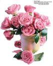 玫瑰花束0057,玫瑰花束,鲜花,