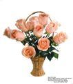 玫瑰花束0061,玫瑰花束,鲜花,