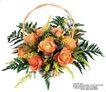 玫瑰花束0062,玫瑰花束,鲜花,