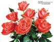 玫瑰花束0075,玫瑰花束,鲜花,红玫瑰 绿叶 大朵