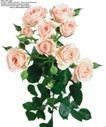 玫瑰花束0079,玫瑰花束,鲜花,娇艳 鲜花 摆饰
