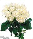 玫瑰花束0080,玫瑰花束,鲜花,纯白色 洁白 墨绿色