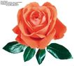 玫瑰花束0105,玫瑰花束,鲜花,徘徊花 赤蔷薇 刺玫花
